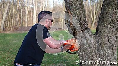 Een arbeider snijdt gevaarlijk bij een boom met kettingzaag terwijl onder een grote tak ALT2 stock footage