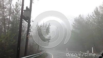 Een bos in een mist stock video