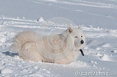 In een diepe sneeuw