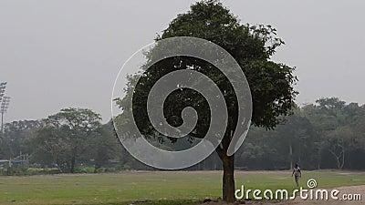 Een enkele eiken boom op een weide in de zomerzonsondergang Plattelandslandschap Achtergrond milieubehoud Levensvatboom stock video