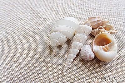 Zeeschelpen op linnen achtergrondstilleven