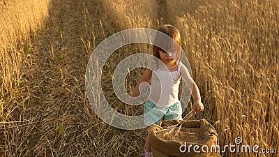 Een klein meisje in een veld met tarwespelen met parels en korrels in een tas Oogst van tarwe op het veld Kindertijd in stock video