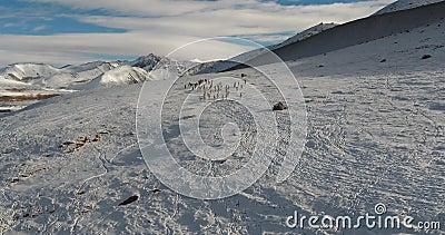 Een kudde van wilde schapen in de aard van Kyrgyzstan stock footage