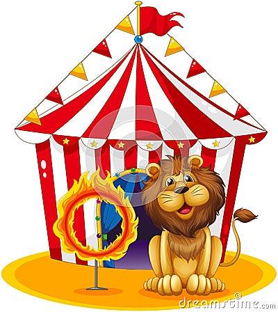Een leeuw naast een brandhoepel bij het circus