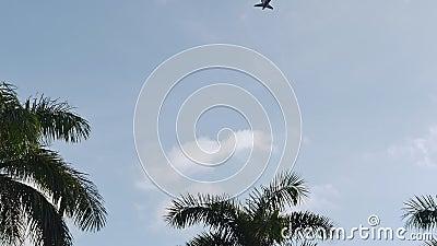 Een mening van een vliegtuig die over de duidelijke hemel en een palmtop naast het vliegen - Zonneschijn die door de palm komen stock videobeelden