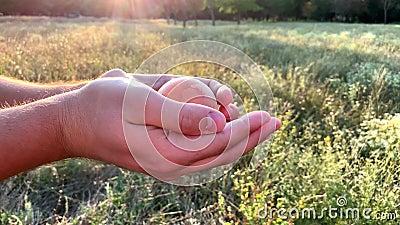 Een mens opent een glasbol in zijn palmen en onderzoekt het Het concept ecologie, natuurbescherming stock videobeelden