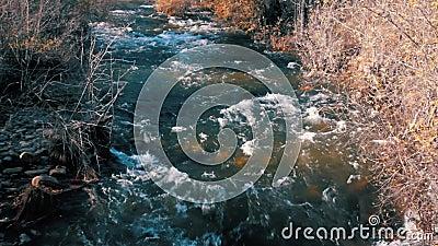 Een Rivier stroomt naast Leafless Bomen in een Mooie Scène in de Herfst stock videobeelden