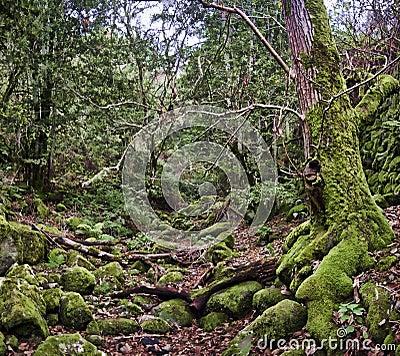 Een verrukt bos
