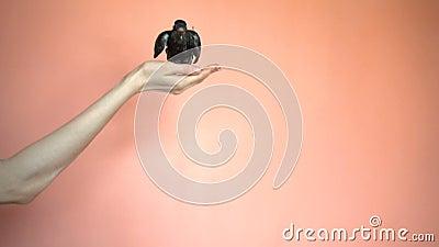 Een Vogel op het Mensen` s Wapen golft zijn Vleugels stock videobeelden