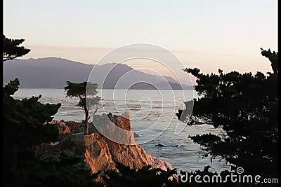 Eenzame cipresboom op kustlijn stock video