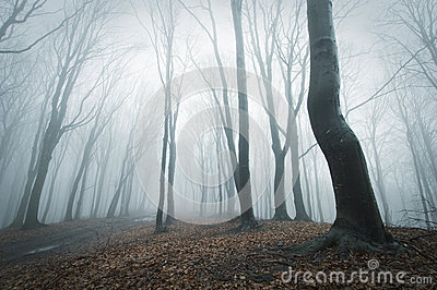 Eerie scene in a forest with fog