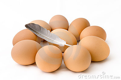 Egg arranged in circle and chicken feather
