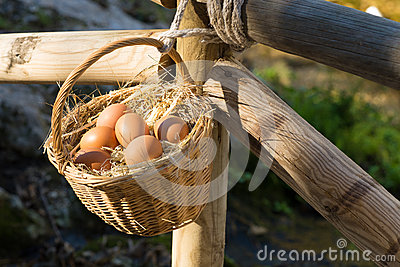 Egg basket in farm