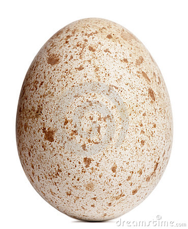 Egg of Egyptian Vulture, Neophron percnopterus