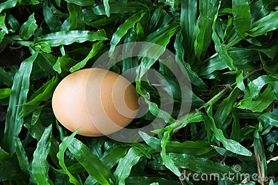 The egg on grass