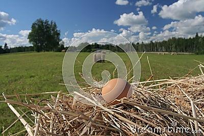 Egg in hay