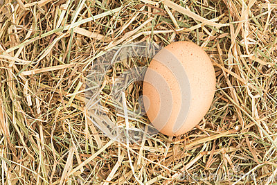 Egg nestled in straw