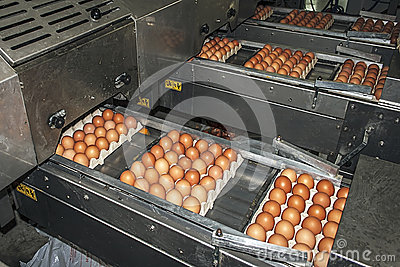 Egg packaging lines 3