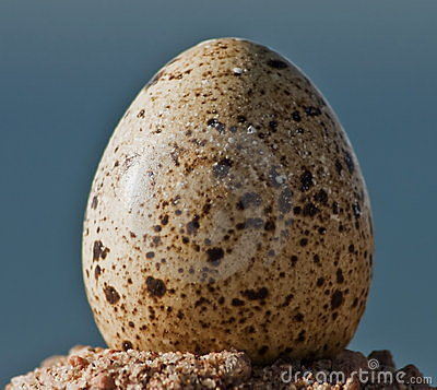 Egg of quail