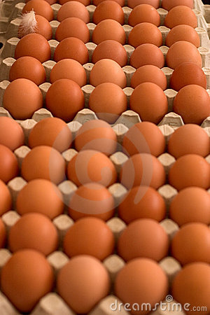Free Eggs Royalty Free Stock Photography - 2303747