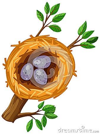 Eggs in bird nest Vector Illustration