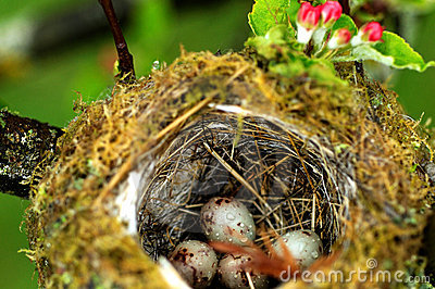 Eggs in birds nest