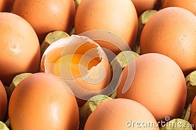 Eggs in cardboard