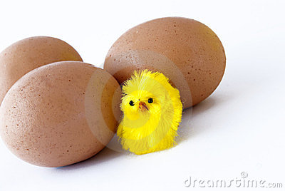 Eggs and chick