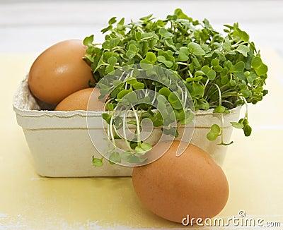 Eggs and cress (Lepidium sativum)