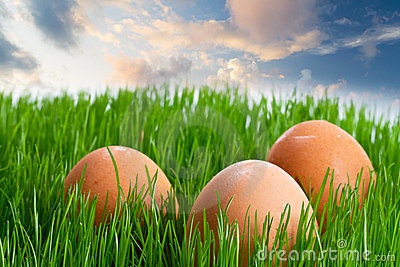 Eggs in the grass over blue sky