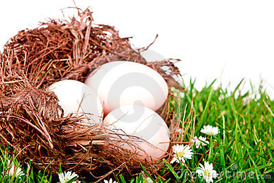 Eggs in nest on  fresh spring green grass