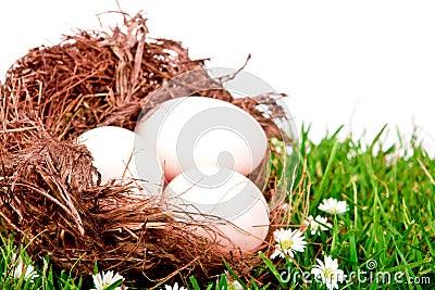 Eggs in nest on  fresh spring green grass