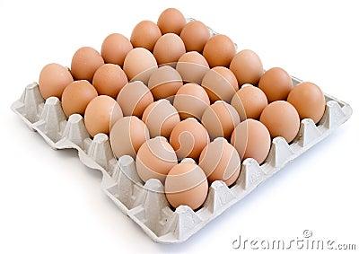 Eggs new 11