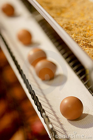 Free Eggs On A Conveyor Belt Stock Photos - 12026713