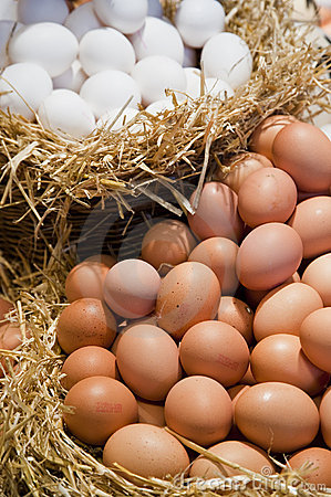Free Eggs On Straw Stock Photo - 10604870