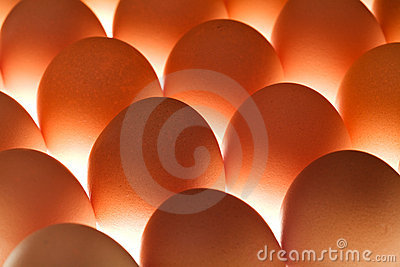 Eggs - under lit