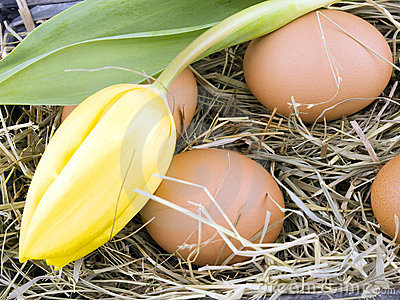 Eggs and yellow tulip lying on hay