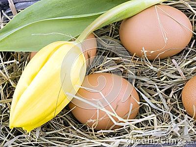 Eggs and yellow tulip lying on hay
