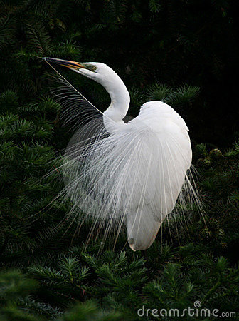 Egret angel