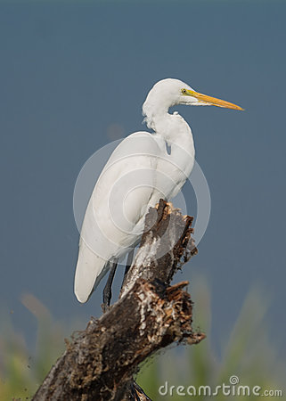 Free Egret Bird Stock Photos - 82165293