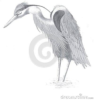 Egret drawing
