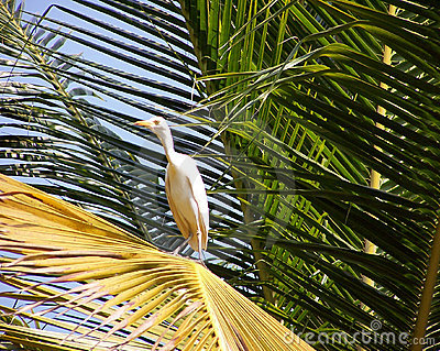 Egret on a palm leaf