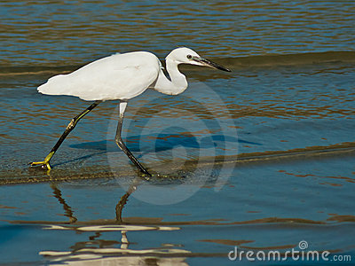 Egret on sea shore