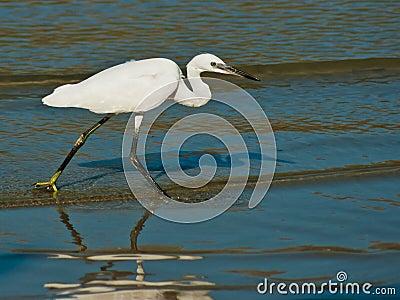 Egret on sea shore