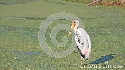 Egret standing on pond