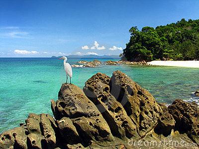 Egret standing on rock in beautiful Island