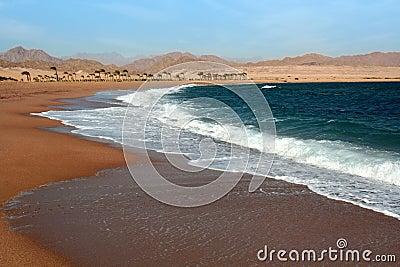 Egypt . Beach in Charm an ale the Sheikh