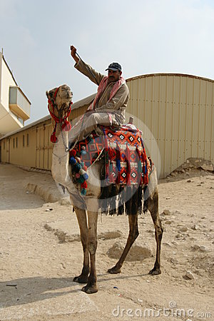 Egypt Camel Rider Editorial Stock Image