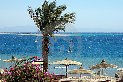 Egypt, Dahab, Sinai Peninsula. Red sea.