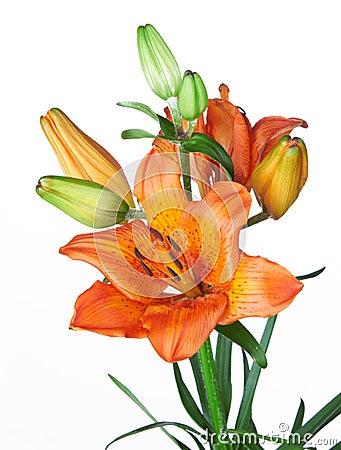 Egzotyczni kwiaty